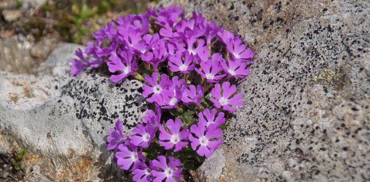 Geologie und Flora